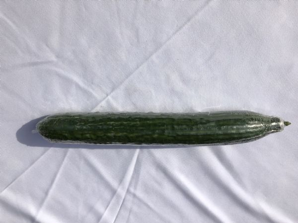 Cucumber Whole each